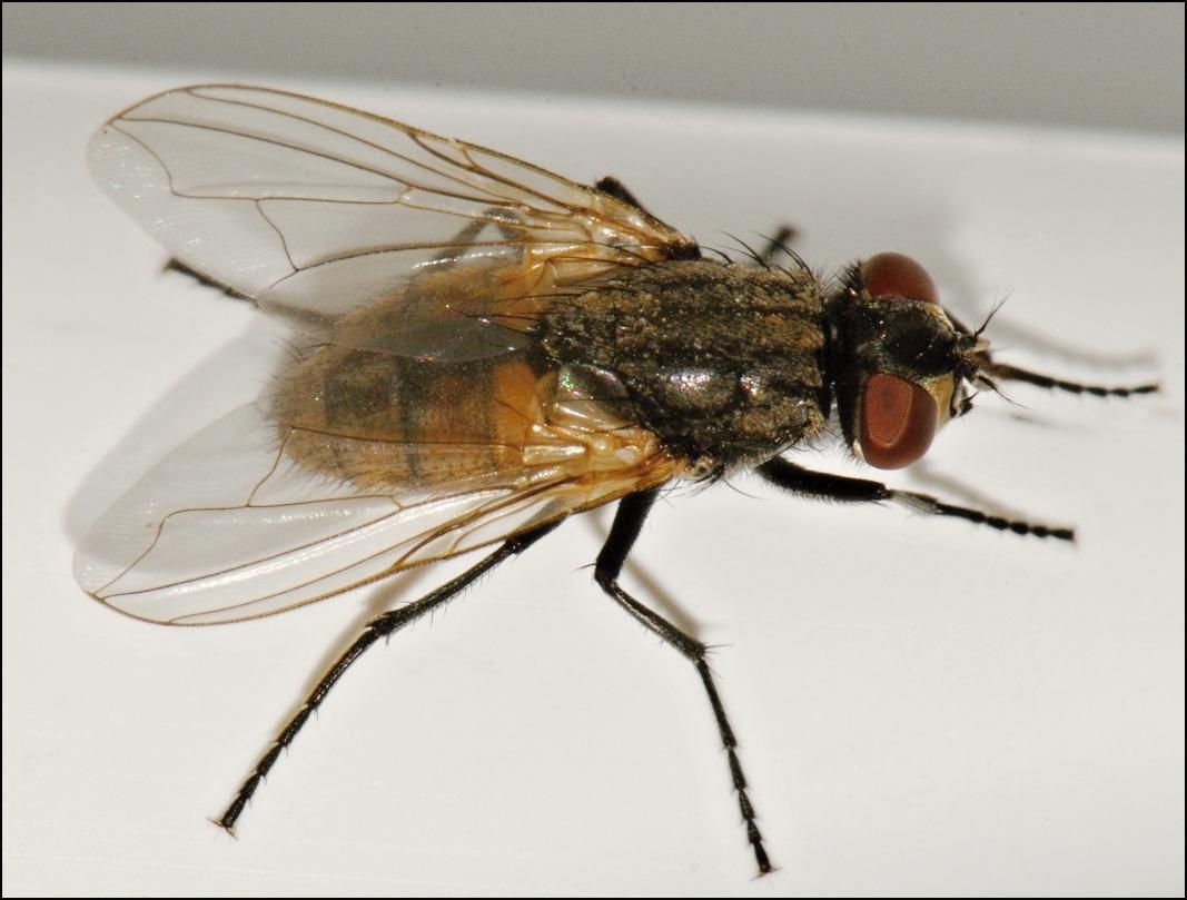 живые картинки мухи рпк осуществляет продажу